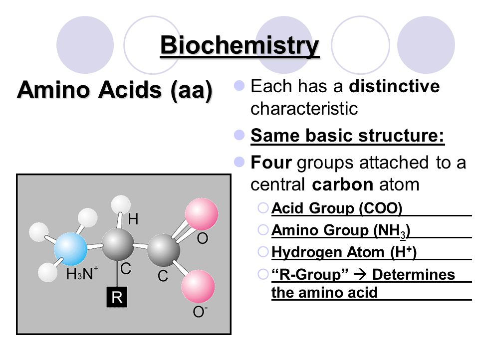 Biochemistry Proteins *Basic Monomer *Basic Monomer Basic building material of all living things Examples: hair, nails, blood, muscle, skin Sources: egg whites, gelatin, meat Amino Acid