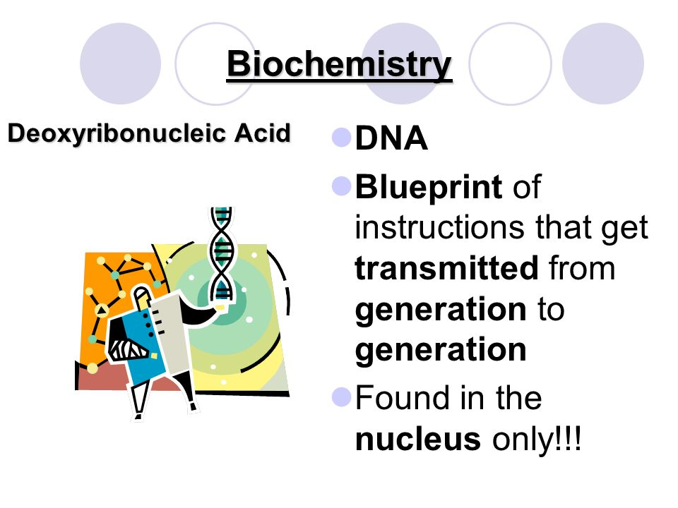 Biochemistry Nucleic Acids *Basic Monomer *Basic Monomer Carry instructions for cellular activity Nucleotide
