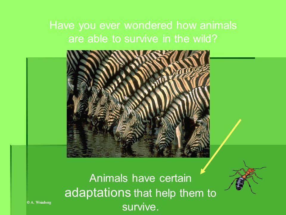 © A. Weinberg Chemical defenses (like venom, ink, sprays) Physical adaptation