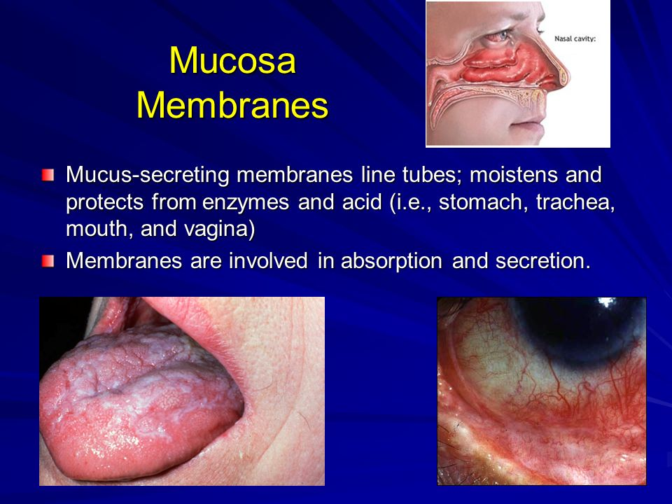 Mucosa Membranes Mucus-secreting membranes line tubes; moistens and protects from enzymes and acid (i.e., stomach, trachea, mouth, and vagina) Membran
