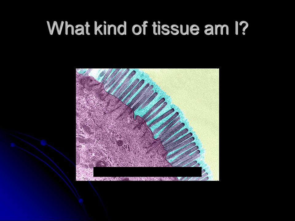 What is the function of Epithelial Tissue.