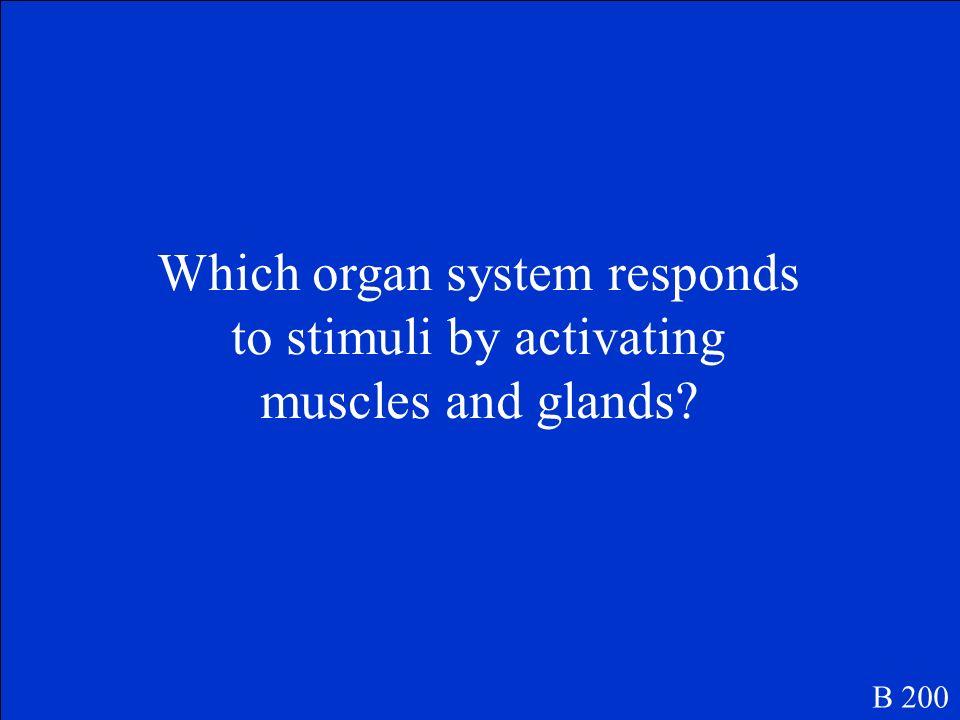Skeletal System B 100