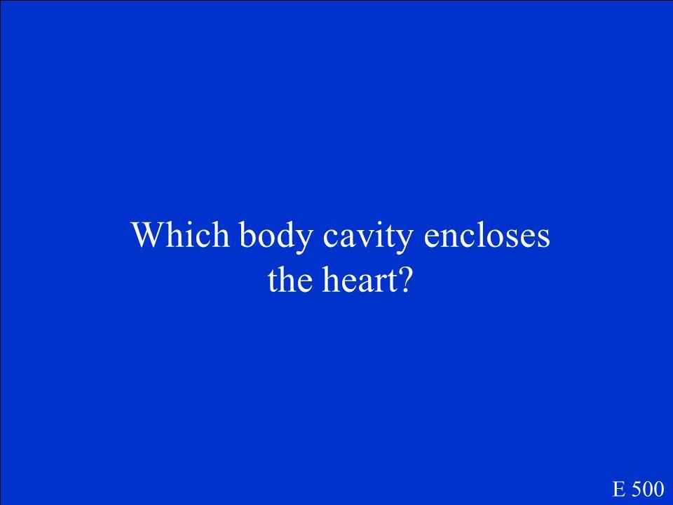 Pleural Cavities E 400