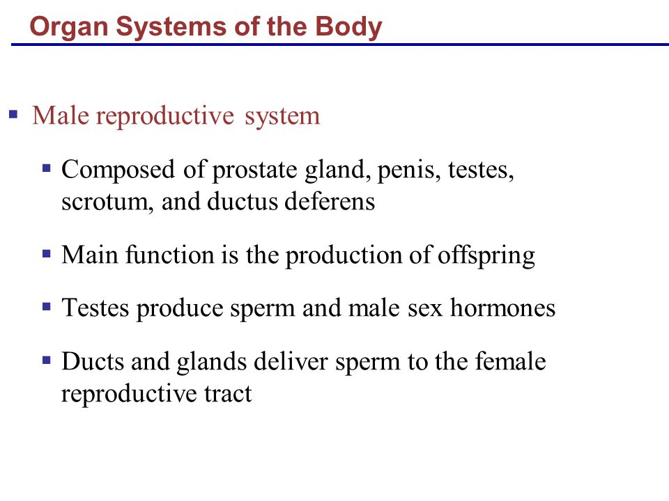 Organ Systems of the Body Female reproductive system Composed of mammary glands, ovaries, uterine tubes, uterus, and vagina Main function is the production of offspring Ovaries produce eggs and female sex hormones Remaining structures serve as sites for fertilization and development of the fetus Mammary glands produce milk to nourish the newborn