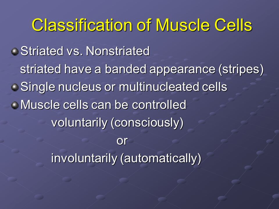 Classification of Muscle Cells Striated vs. Nonstriated striated have a banded appearance (stripes) striated have a banded appearance (stripes) Single
