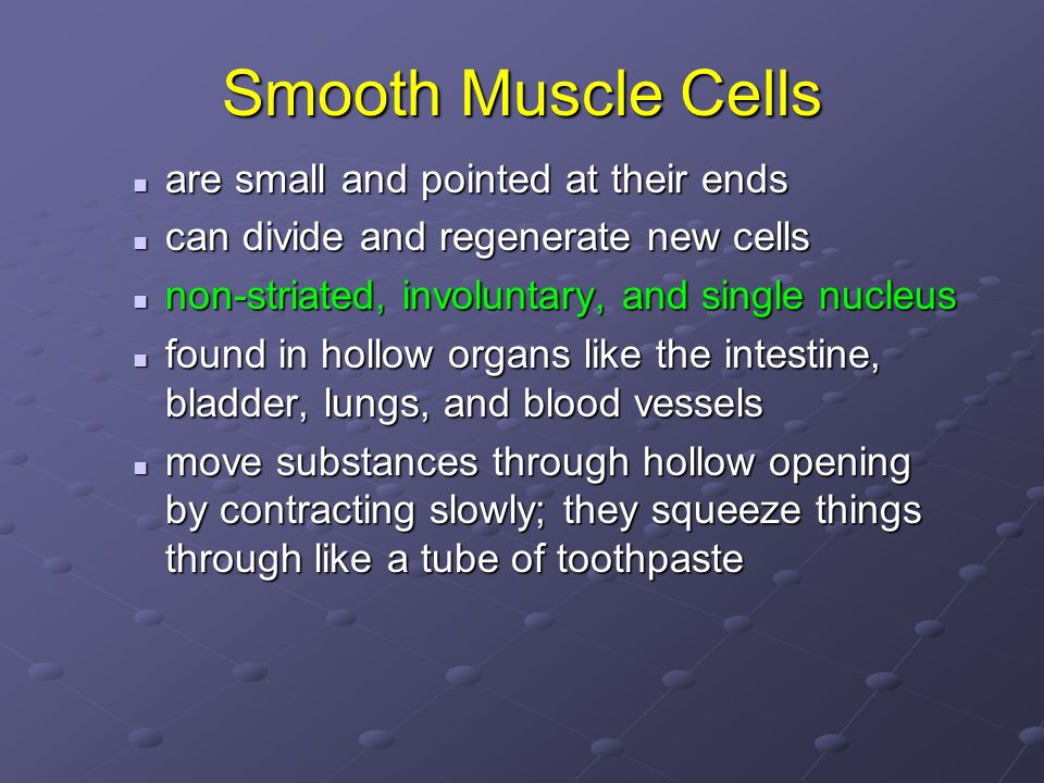 Smooth Muscle Cells are small and pointed at their ends are small and pointed at their ends can divide and regenerate new cells can divide and regener