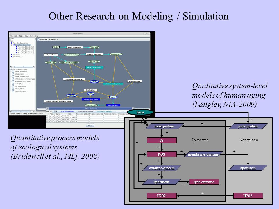 Other Research on Modeling / Simulation – + + – + ++ + + Time – LysosomeCytoplasm Fe ROS lytic-enzyme membrane-damage lipofuscin junk-proteinjunk-protein H202 lipofuscin H202 oxidized-protein + + + Quantitative process models of ecological systems (Bridewell et al., MLj, 2008) Qualitative system-level models of human aging (Langley, NIA-2009)