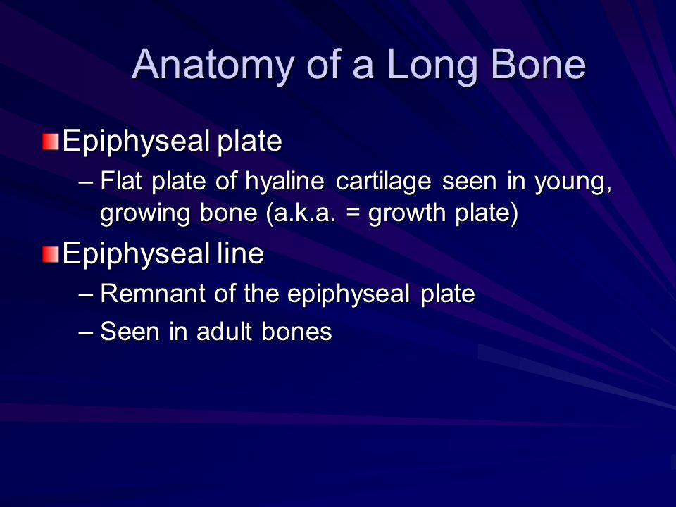 Anatomy of a Long Bone Epiphyseal plate –Flat plate of hyaline cartilage seen in young, growing bone (a.k.a. = growth plate) Epiphyseal line –Remnant