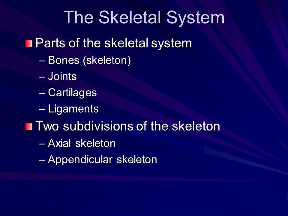The Skeletal System Parts of the skeletal system –Bones (skeleton) –Joints –Cartilages –Ligaments Two subdivisions of the skeleton –Axial skeleton –Ap