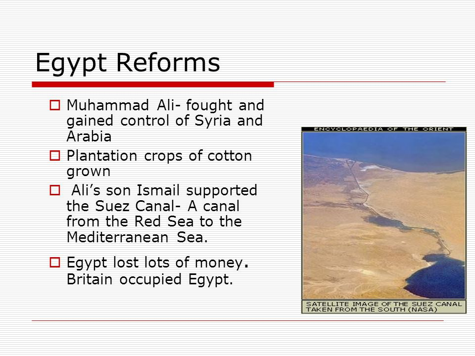 Egypt Reforms Muhammad Ali- fought and gained control of Syria and Arabia Plantation crops of cotton grown Alis son Ismail supported the Suez Canal- A