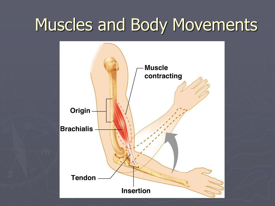 Types of Ordinary Body Movements Flexion Decreases the angle of the joint Brings two bones closer together Typical of hinge joints like knee and elbow Extension Opposite of flexion Increases angle between two bones
