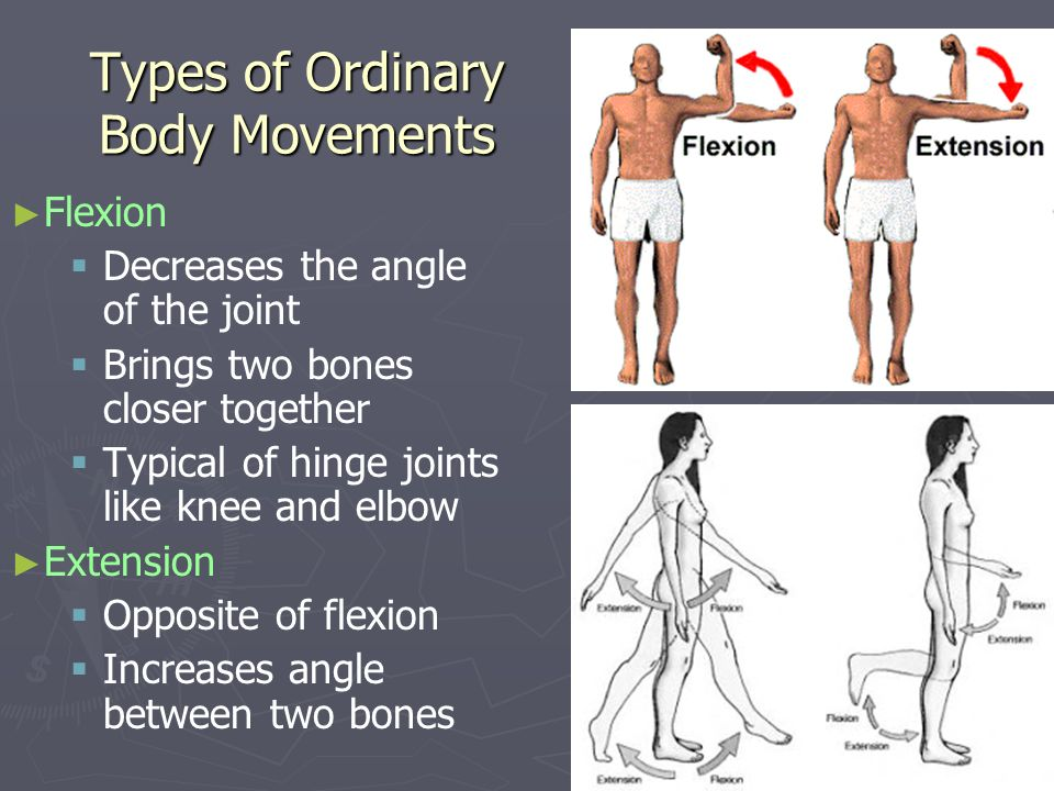 Types of Ordinary Body Movements Flexion Decreases the angle of the joint Brings two bones closer together Typical of hinge joints like knee and elbow