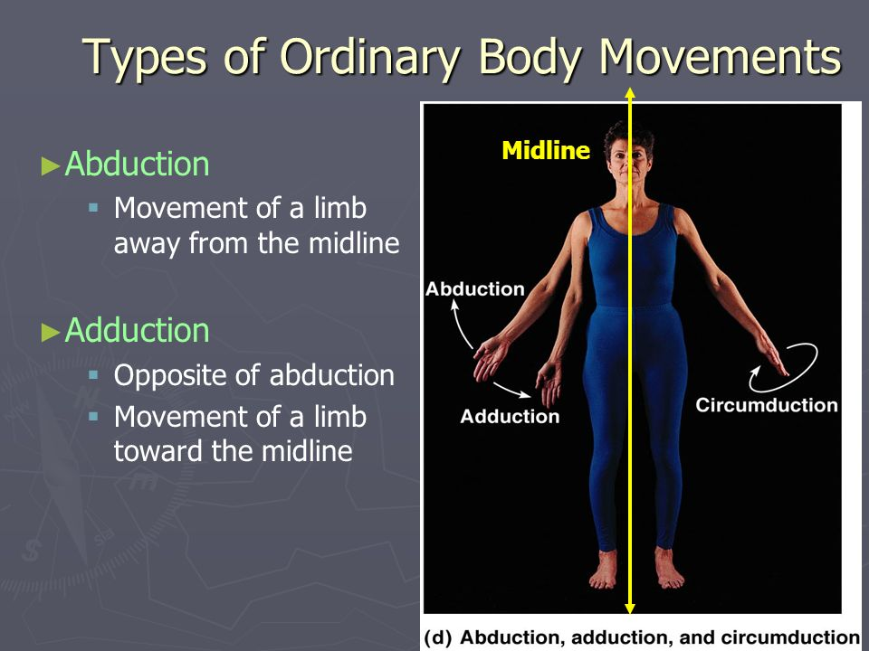 Types of Ordinary Body Movements Abduction Movement of a limb away from the midline Adduction Opposite of abduction Movement of a limb toward the midl