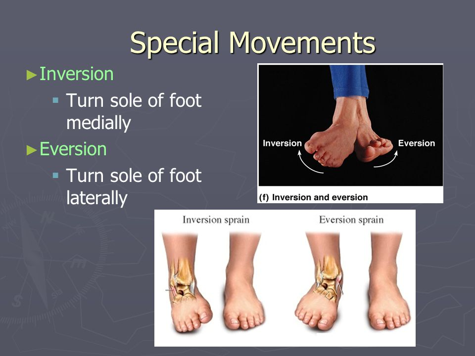 Special Movements Supination Forearm rotates so palm faces up (anterior side) Pronation Forearm rotates so palm faces down (posterior side)