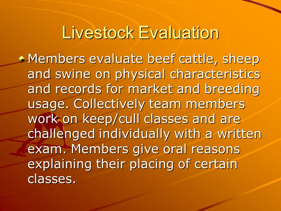 Livestock Evaluation Members evaluate beef cattle, sheep and swine on physical characteristics and records for market and breeding usage.