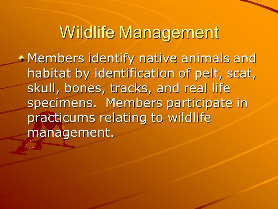 Wildlife Management Members identify native animals and habitat by identification of pelt, scat, skull, bones, tracks, and real life specimens.