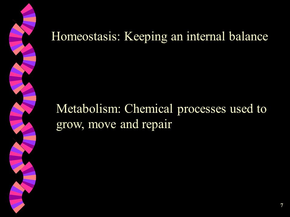 7 Homeostasis: Keeping an internal balance Metabolism: Chemical processes used to grow, move and repair