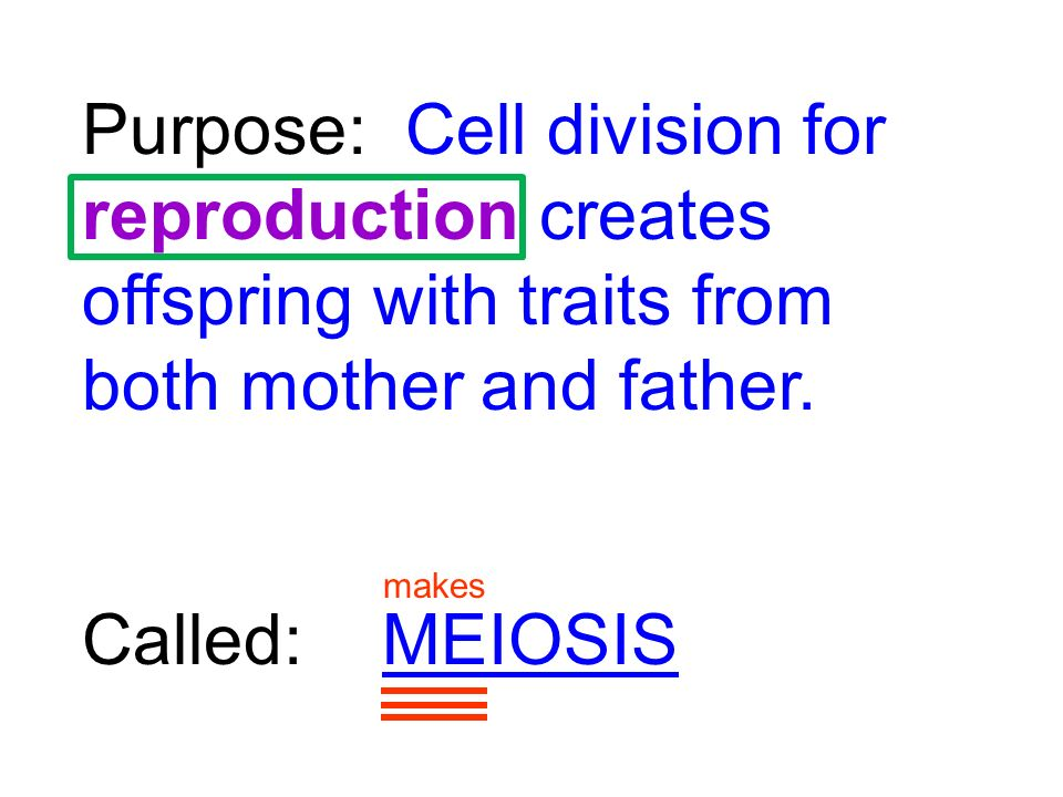 Purpose: Cell division for reproduction creates offspring with traits from both mother and father.