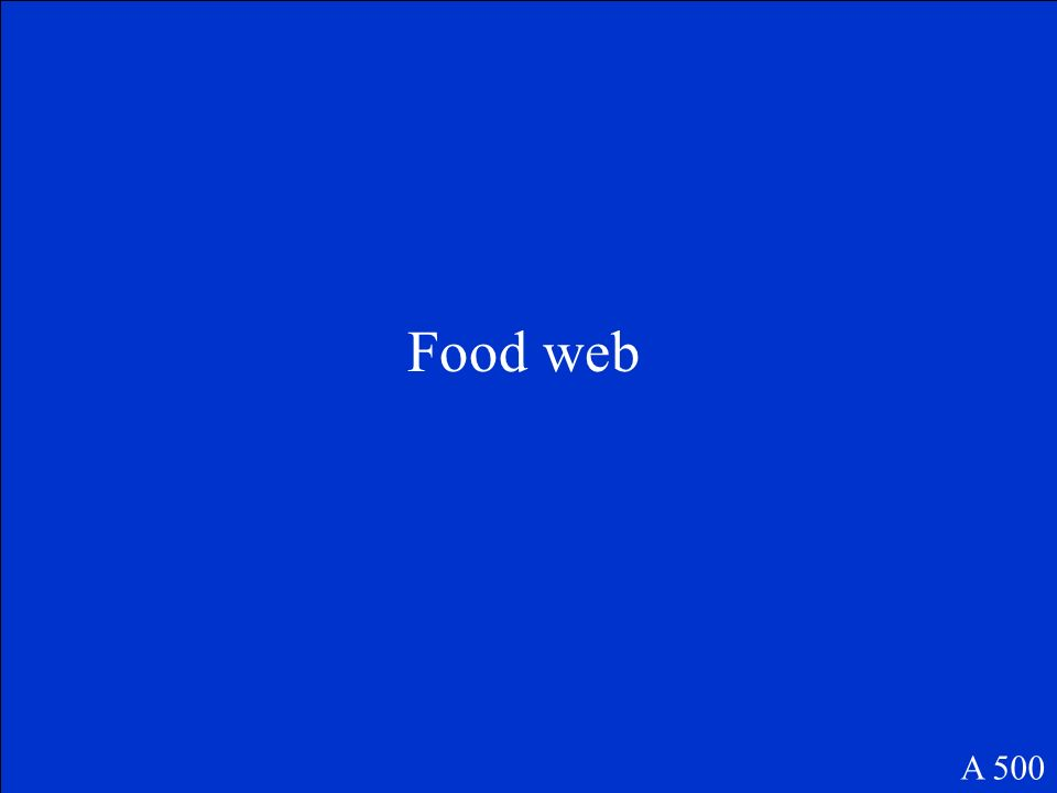 This is an interconnected group of food chains. A 500