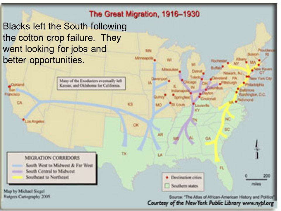 Blacks left the South following the cotton crop failure.