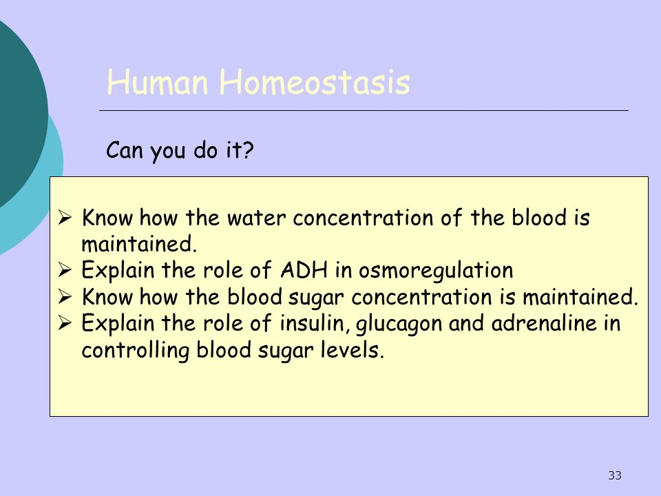33 Human Homeostasis Can you do it? Know how the water concentration of the blood is maintained. Explain the role of ADH in osmoregulation Know how th