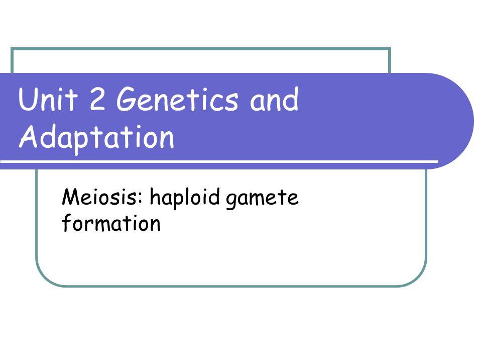 Unit 2 Genetics and Adaptation Meiosis: haploid gamete formation