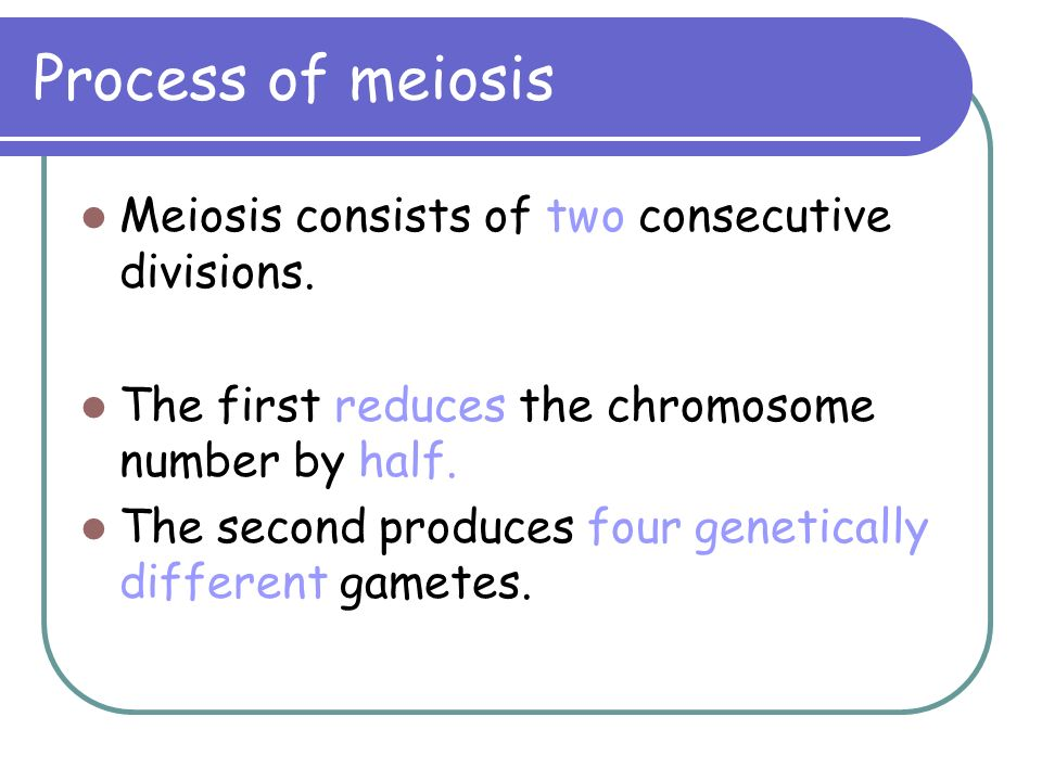 Process of meiosis Meiosis consists of two consecutive divisions. The first reduces the chromosome number by half. The second produces four geneticall