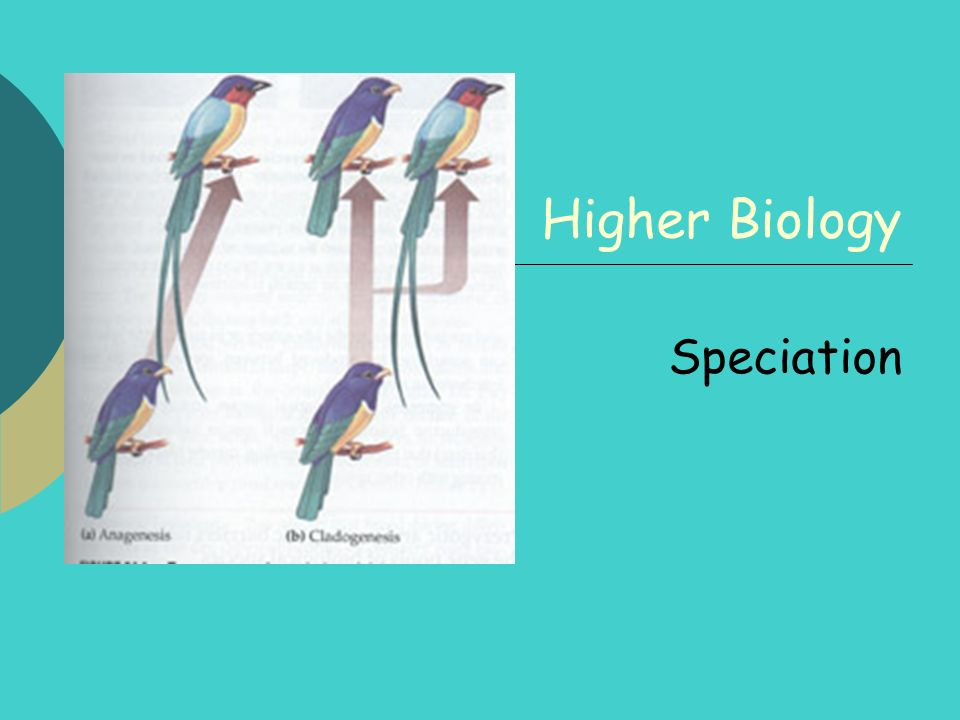 2 By the end of this lesson you should be able to: Explain what a species is Know what is meant by a gene pool Know what happens during speciation Name the 6 stages leading to the development of a new species Name 3 different isolating mechanisms Know how the 3 sub-species of European wren have evolved