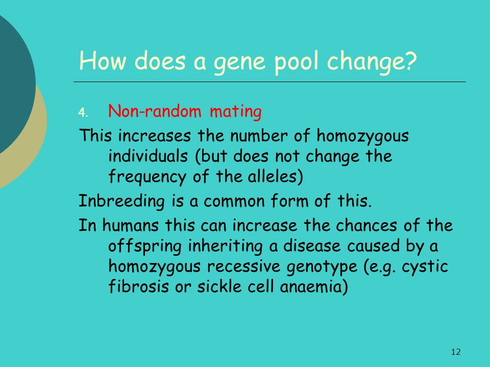 12 How does a gene pool change? 4. Non-random mating This increases the number of homozygous individuals (but does not change the frequency of the all