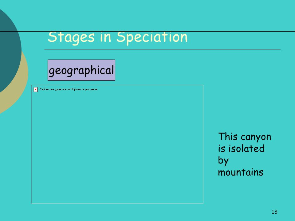 18 Stages in Speciation geographical This canyon is isolated by mountains