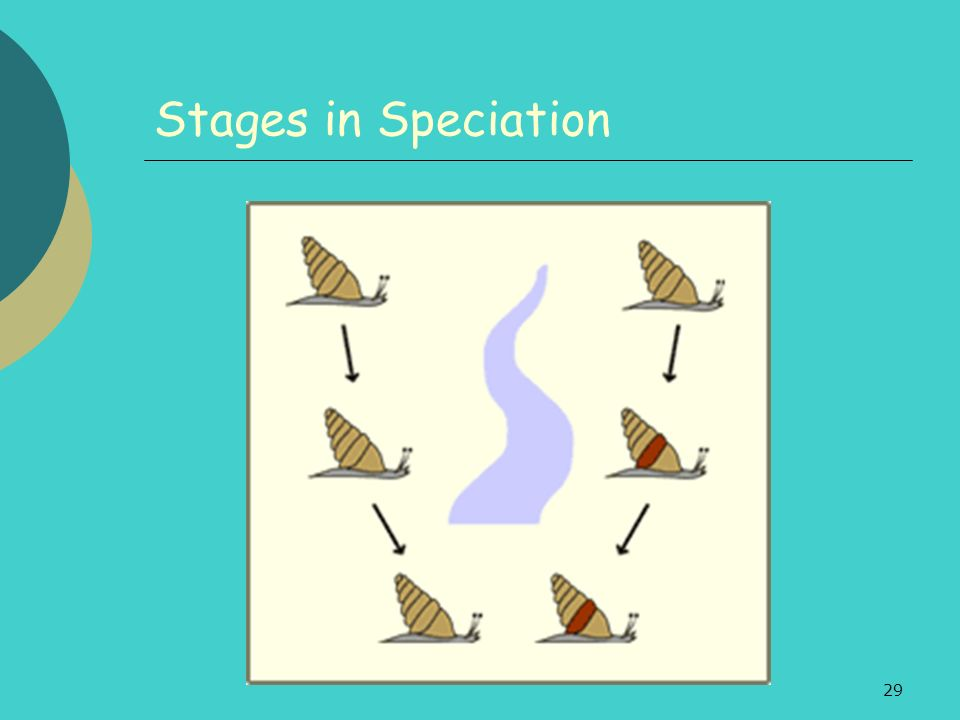 29 Stages in Speciation