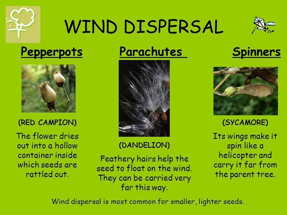 Wind Dispersal