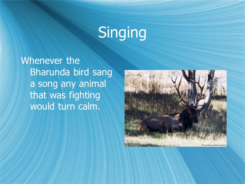 Singing Whenever the Bharunda bird sang a song any animal that was fighting would turn calm.