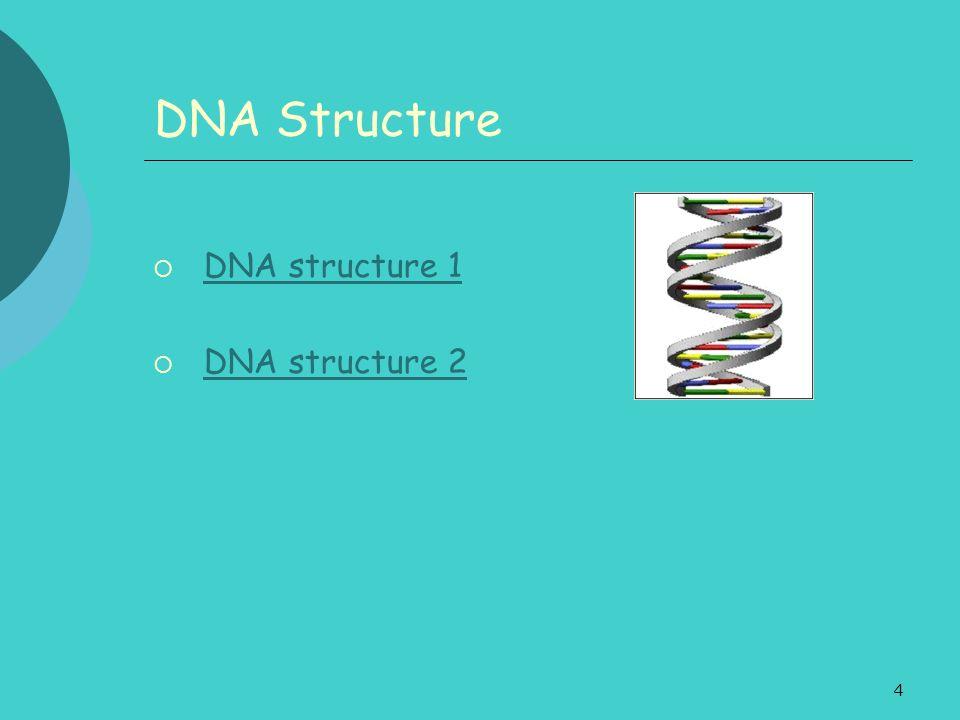4 DNA Structure DNA structure 1 DNA structure 2