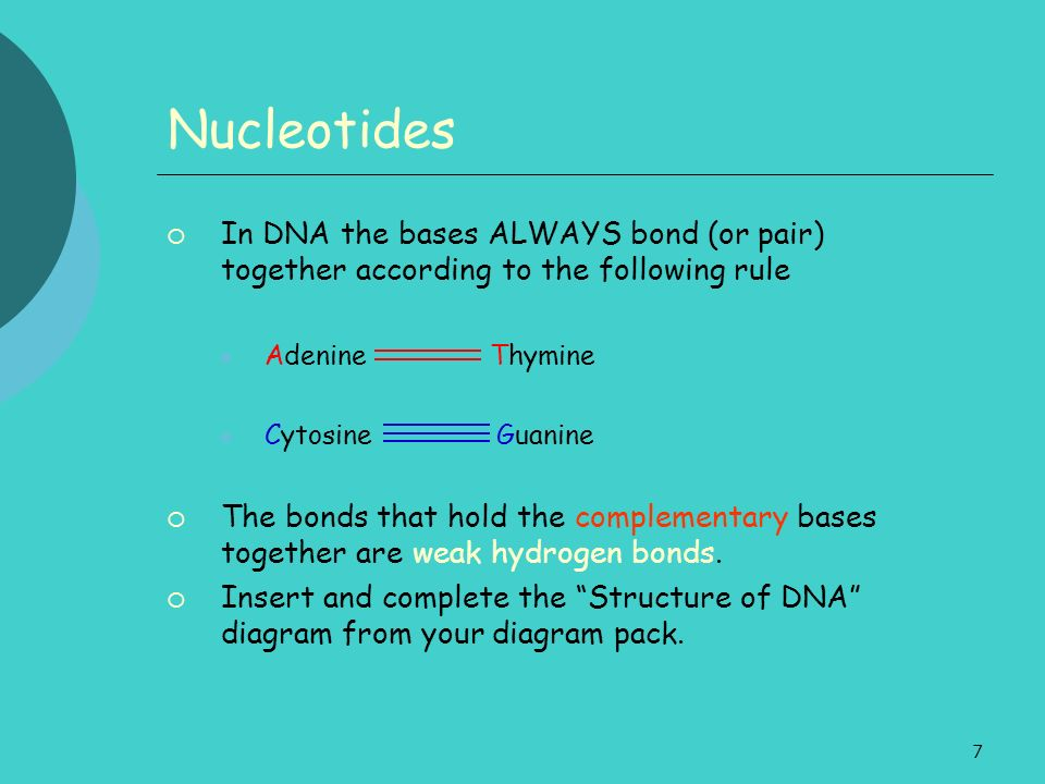7 Nucleotides In DNA the bases ALWAYS bond (or pair) together according to the following rule Adenine Thymine Cytosine Guanine The bonds that hold the