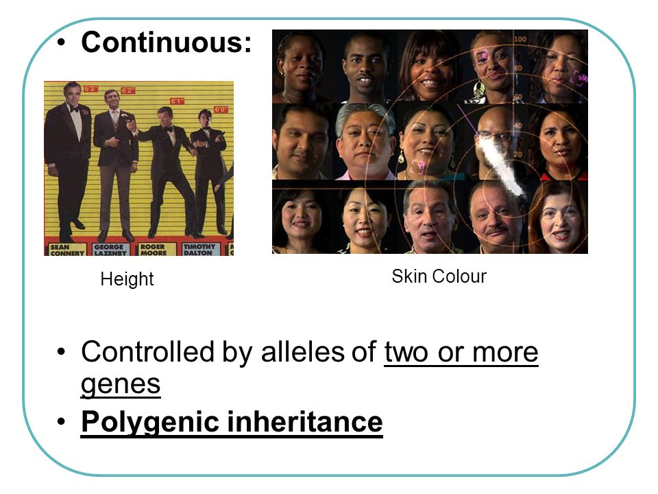 Continuous: Controlled by alleles of two or more genes Polygenic inheritance Height Skin Colour