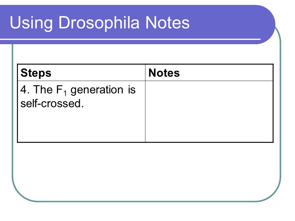 Using Drosophila Notes StepsNotes 4. The F 1 generation is self-crossed. This produces the F 2 generation.
