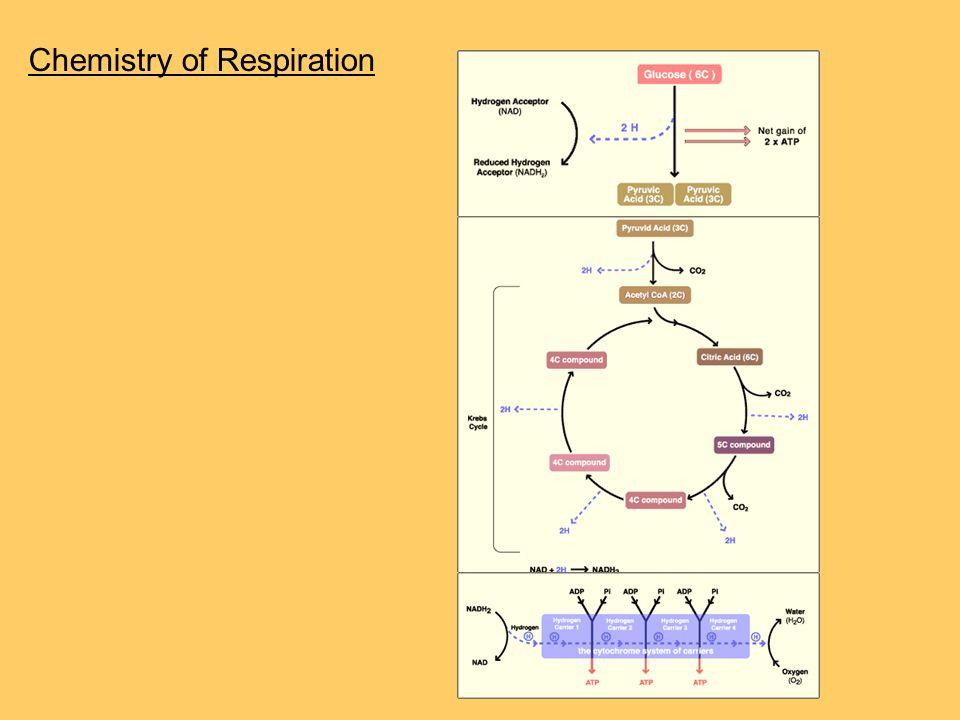 Chemistry of Respiration