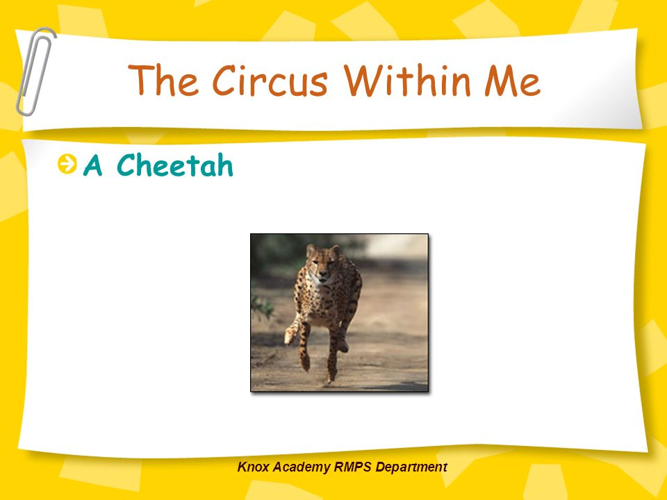 Knox Academy RMPS Department The Circus Within Me A Cheetah