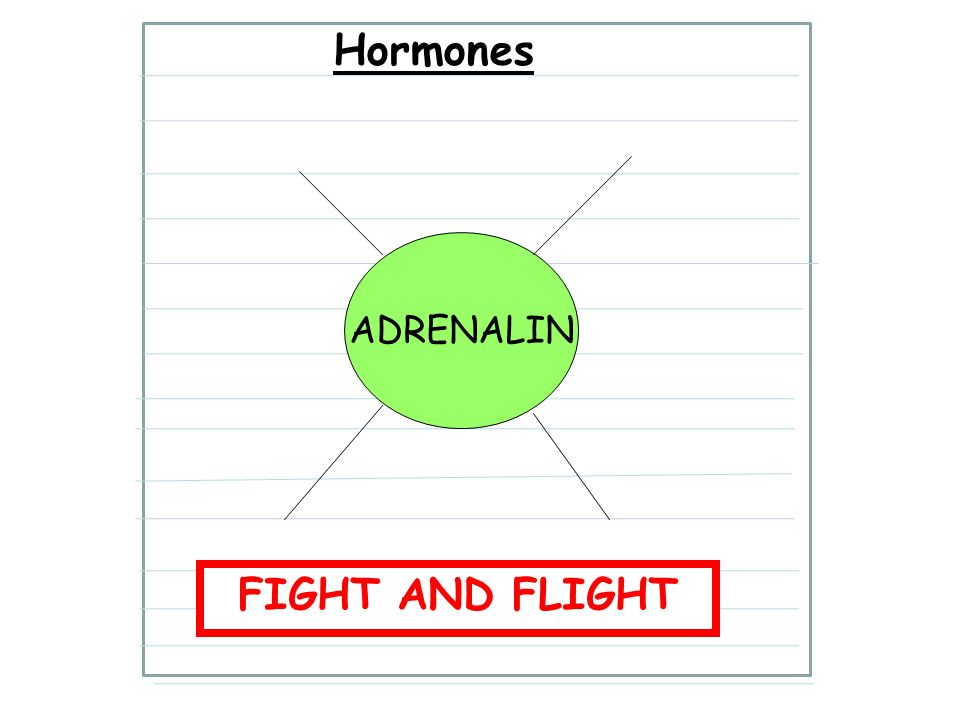 LO: Hormones ADRENALIN FIGHT AND FLIGHT