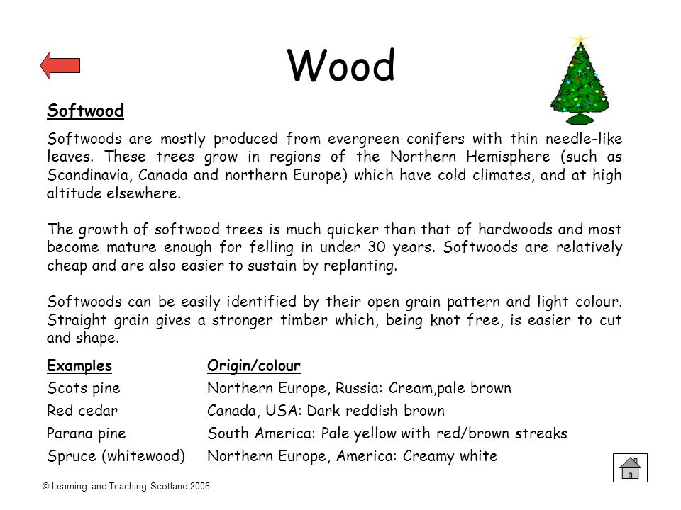 © Learning and Teaching Scotland 2006 Wood Softwood Softwoods are mostly produced from evergreen conifers with thin needle-like leaves. These trees gr