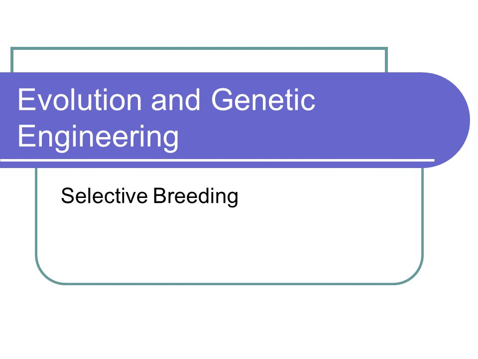 Evolution and Genetic Engineering Selective Breeding