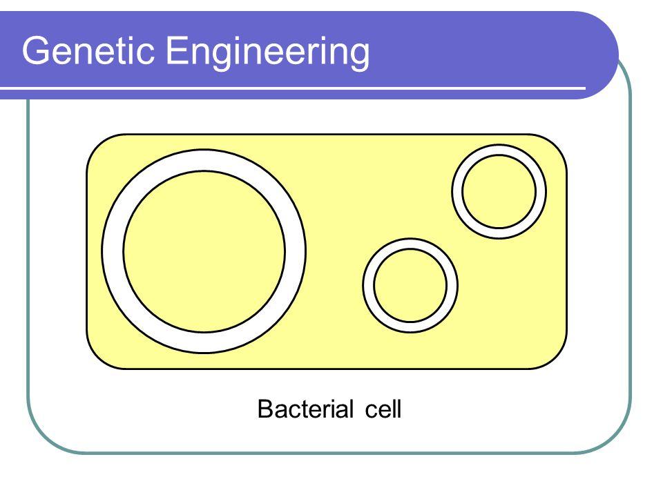 Genetic Engineering Bacterial cell