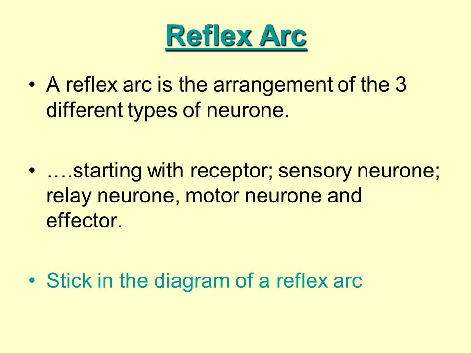 Reflex Arc A reflex arc is the arrangement of the 3 different types of neurone. ….starting with receptor; sensory neurone; relay neurone, motor neuron