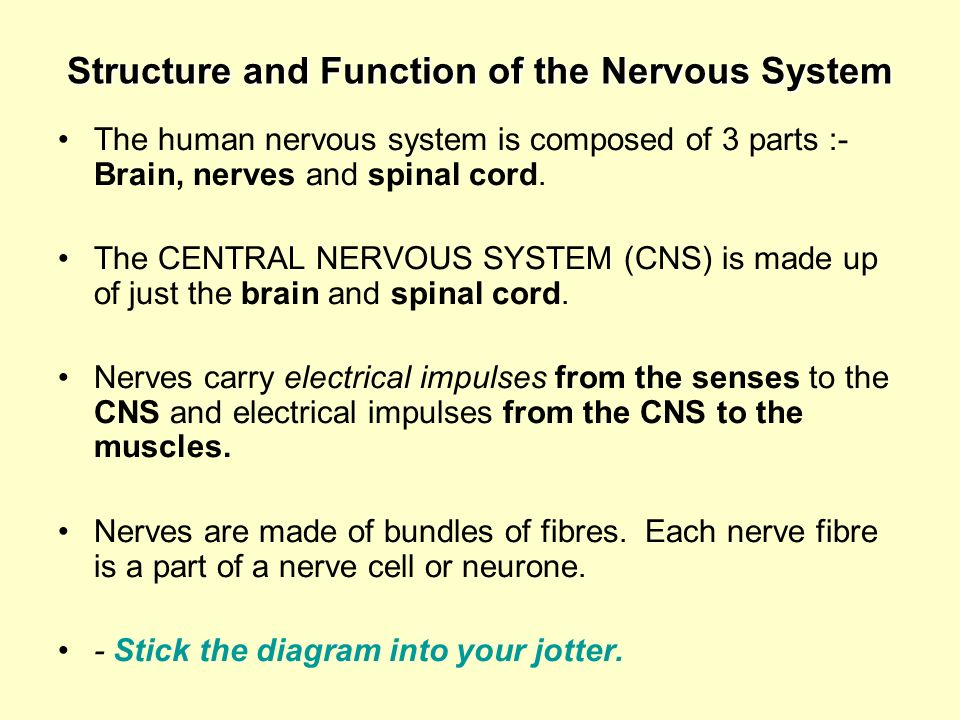 Structure and Function of the Nervous System The human nervous system is composed of 3 parts :- Brain, nerves and spinal cord. The CENTRAL NERVOUS SYS