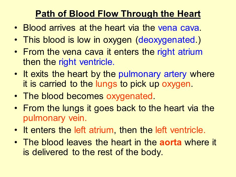 Since the heart wall is made of muscle it must get its own supply of oxygenated blood. The heart is supplied by the coronary arteries. (a branch of th