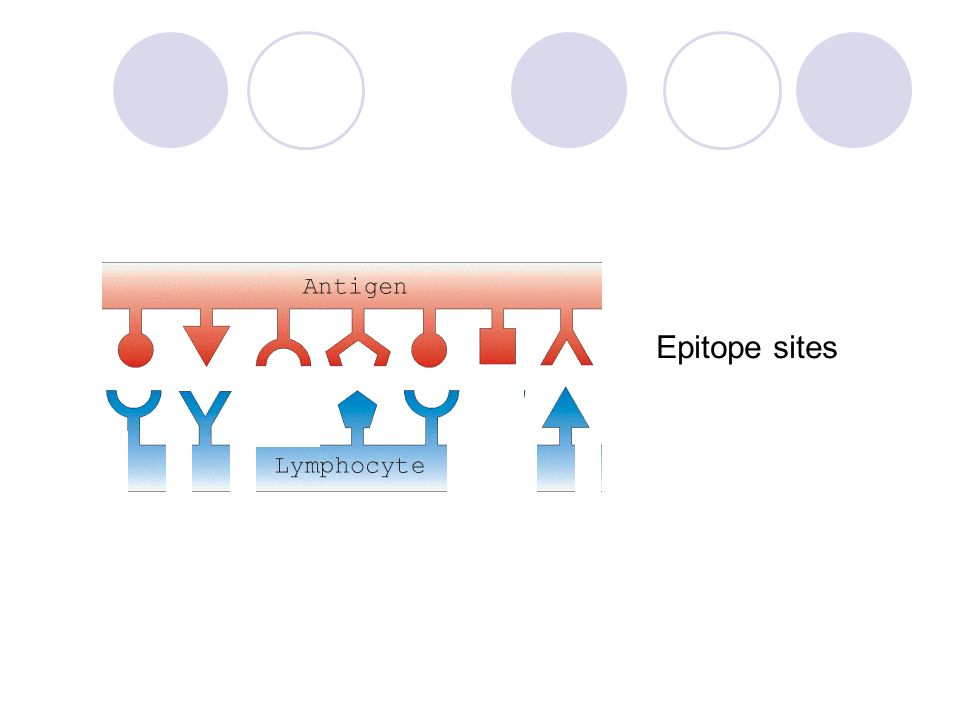 Epitope sites