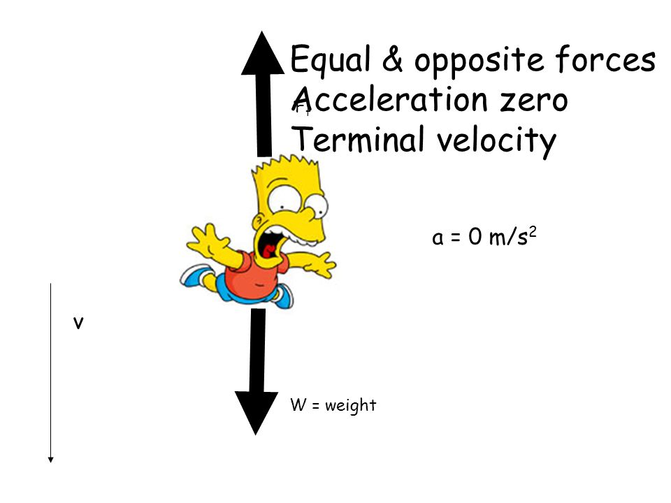 W = weight FfFf a = 0 m/s 2 v Equal & opposite forces Acceleration zero Terminal velocity
