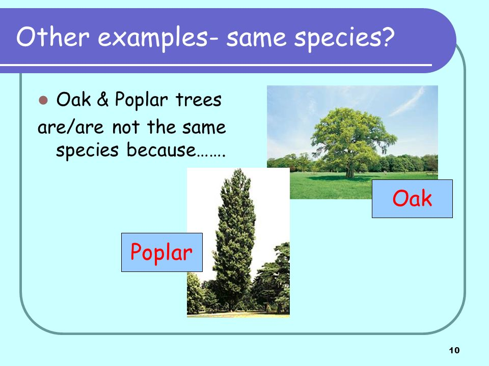 10 Other examples- same species. Oak & Poplar trees are/are not the same species because…….