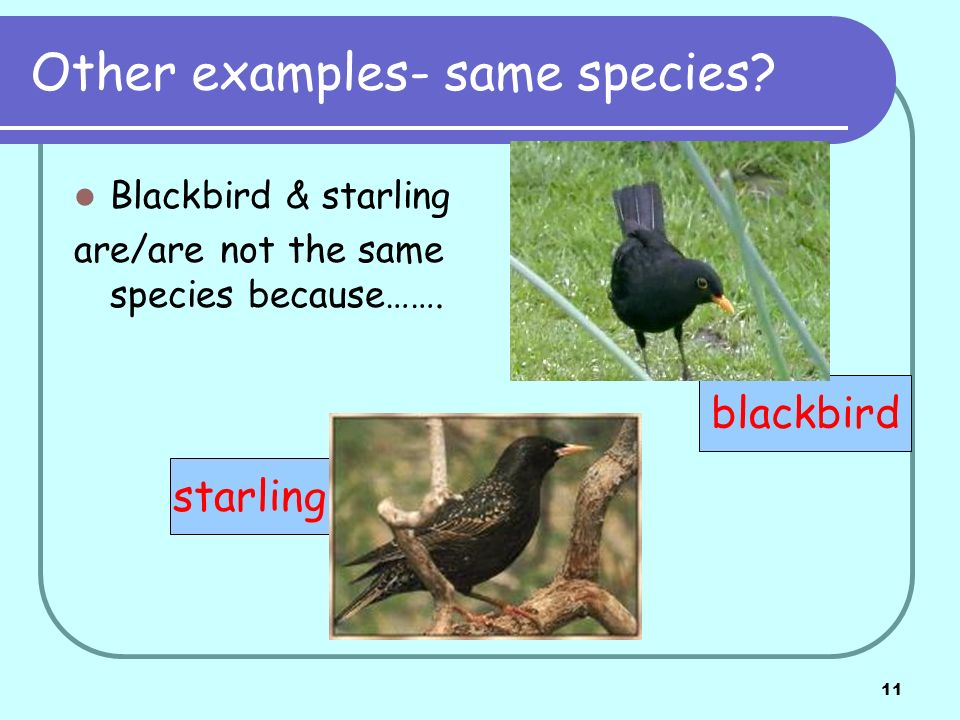 11 Other examples- same species. Blackbird & starling are/are not the same species because…….